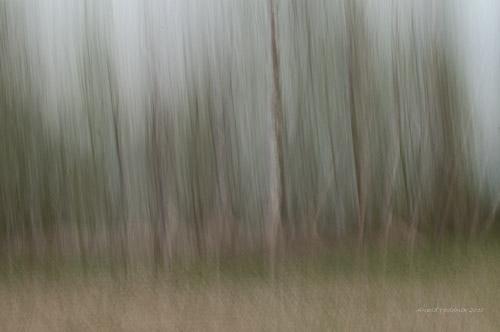 Skogen min
