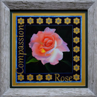 Rose. Compassion