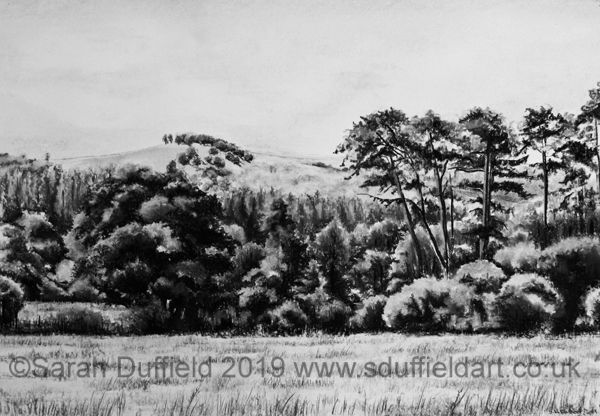 A Charcaol drawing by Artist Sarah Duffield of Chanctonbury hill. A field in the foreground is lined by a variety of trees and shrubs, chanctonbury rises in the distance.