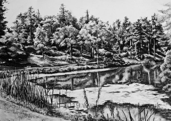 Charcoal drawing by Sussex artist Sarah Duffield of the engine pond at Leonardslee gardens near Horsham. A path follows the contours of a lake then through a bank of trees, sunlight casts dark shadows on the bank.