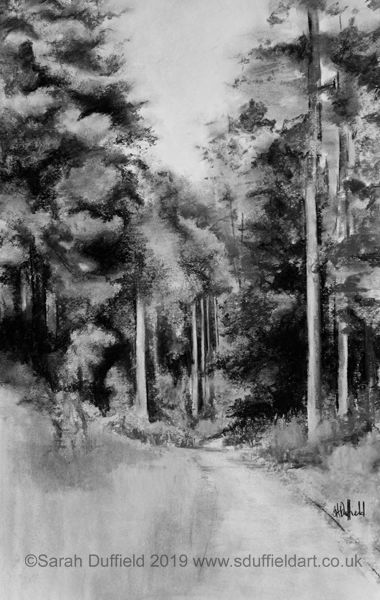 Charcoal drawing by Sussex artist Sarah Duffield. Portrait layout. A pathway leads into and through a forest of tall evergreen trees.