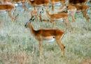Antelope at Yankari Game Reserve, Bauchi State, Nigeria