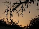 Baobab Tree, at Yankari Game Reserve
