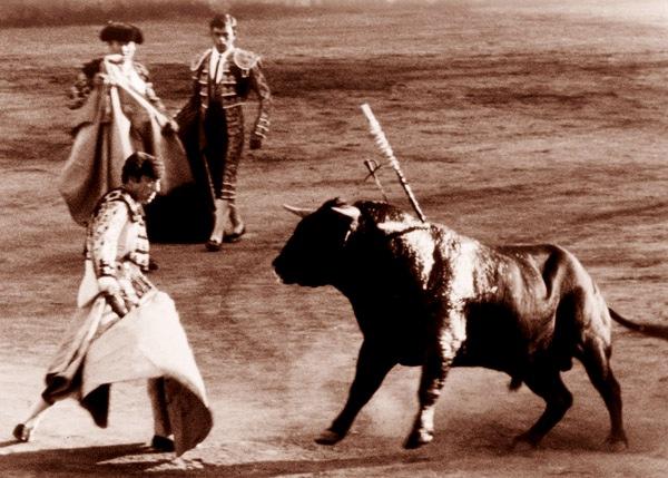 Bull Fighting Spain