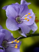 wee-flower