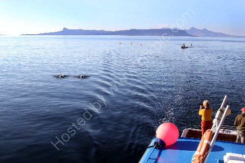 Dolphins, Eigg and Rum