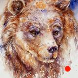 Fearless _the Bear