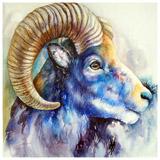 Blue Bighorn