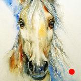 Bonny the Horse