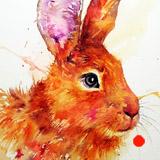 Burnt Orange Hare