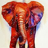 Baby_ Elephant_Terry