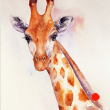 Harry the Giraffe