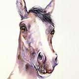 Grey Horse Jerry