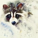 Roco the Raccoon