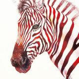 Red Ross Zebra