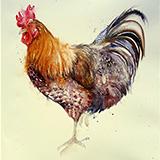 Big Bert _ Rooster