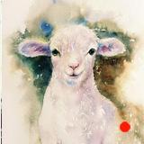 Snowy the Lamb