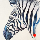 Turquoise Stud Zebra