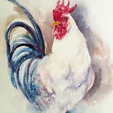 White Rooster with Blue Tail