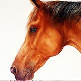 Bourbon_brown horse