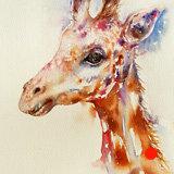 Hugo the Giraffe