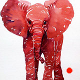 Little Red Baby Elephant