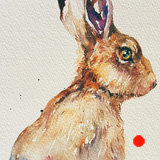 Purple Ear Hare