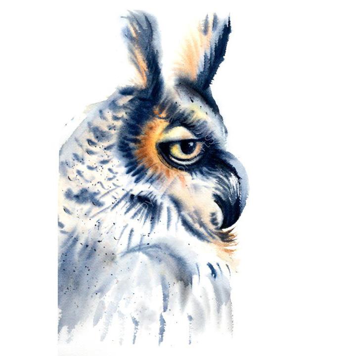 B-58.The Owl