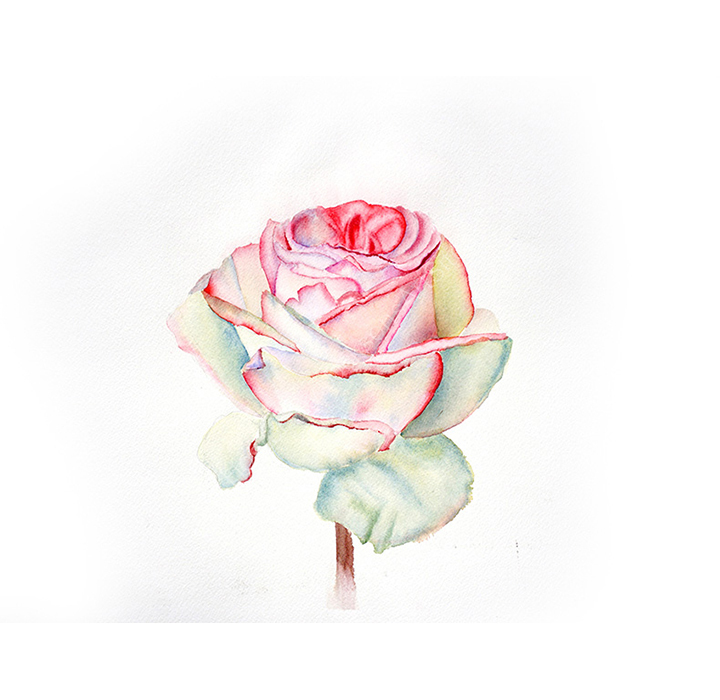 22_Pink Rose