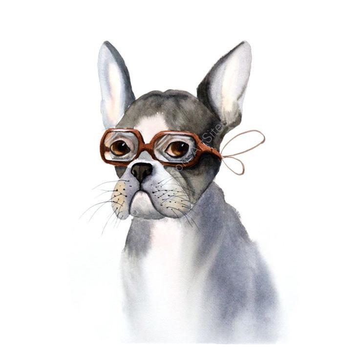 Whimsical dog
