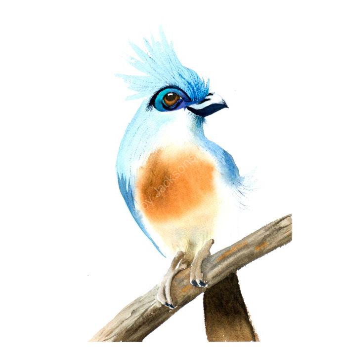 Nice bird