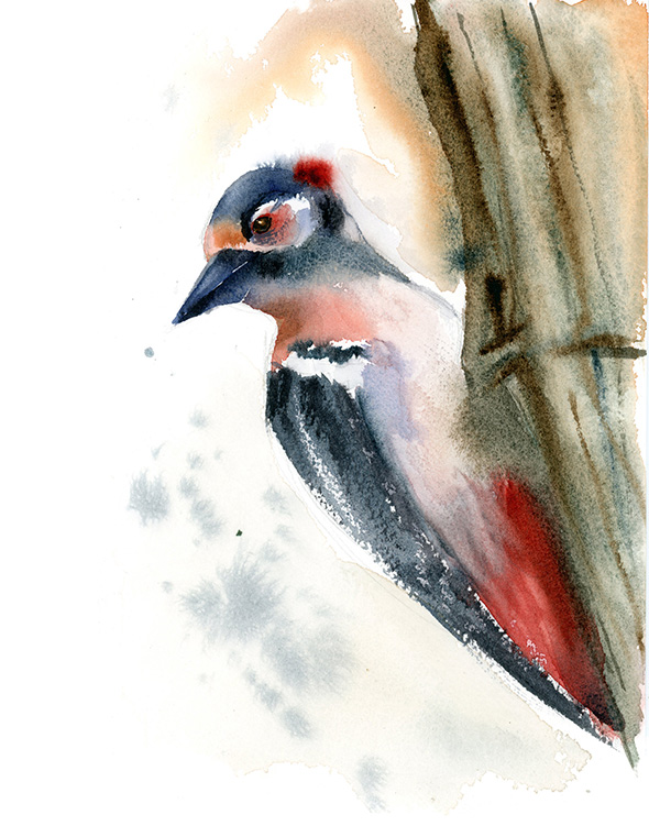 woodpecker-watercolor-by-PaintisPassion
