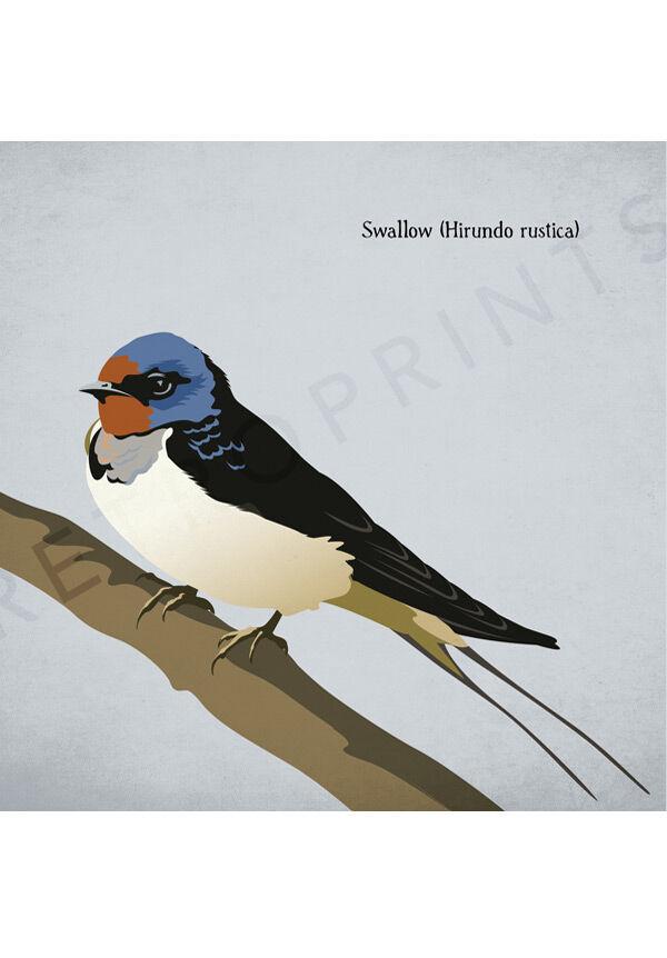 Swallow print