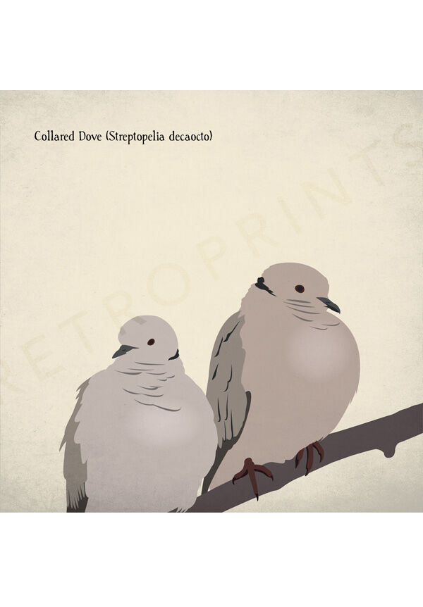 Collared Doves print