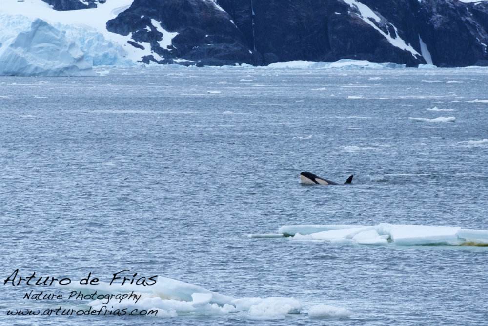 Orca !!