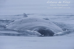 Humpback Whale in the Snow