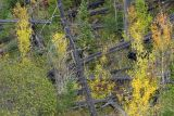 Black Bear hide and seek