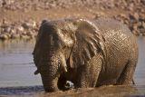 Melted bronze Elephant