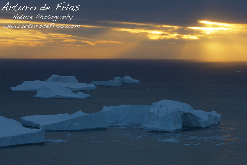 Sunset in the Ice Fjord