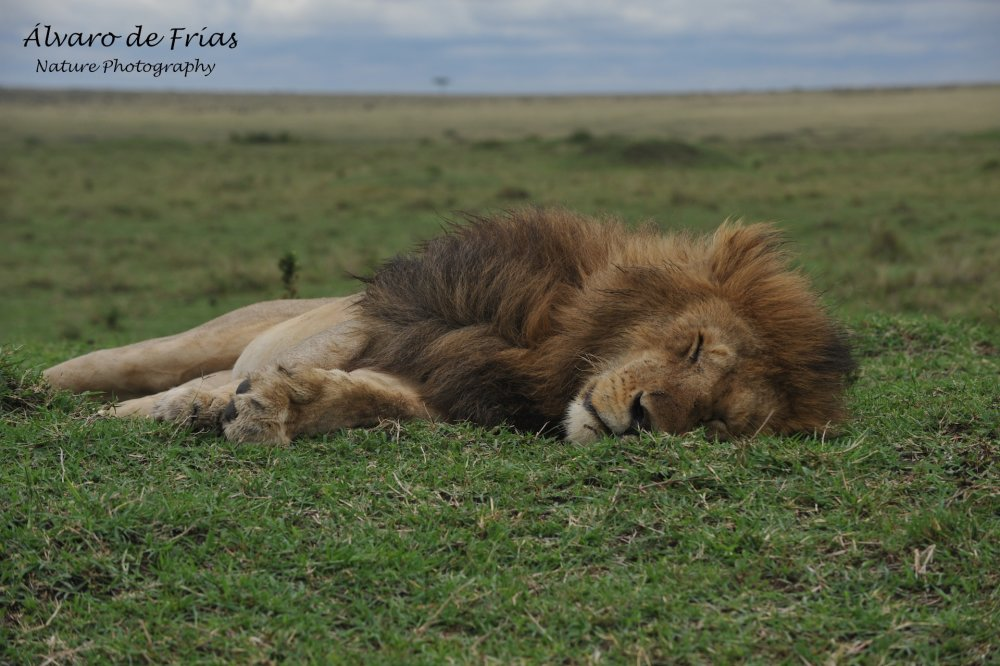 His Majesty is resting