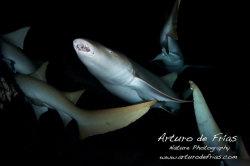 Nurse Sharks