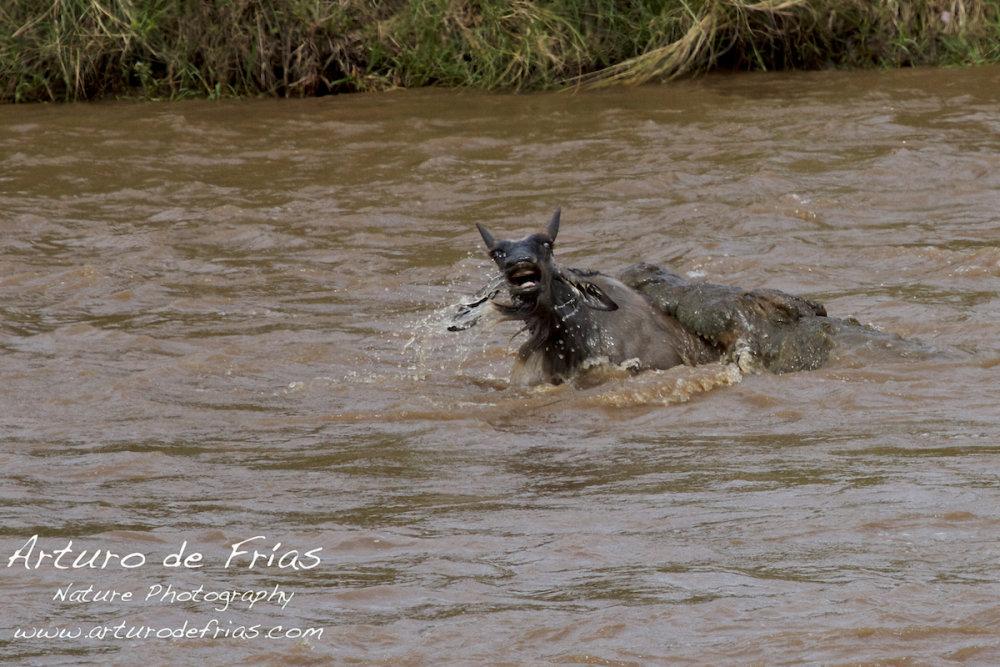 Crocodile Attack 4