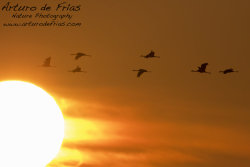 The Cranes and the Sun