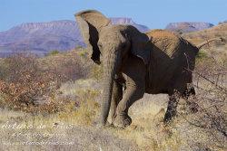 Elephant Mock Charge