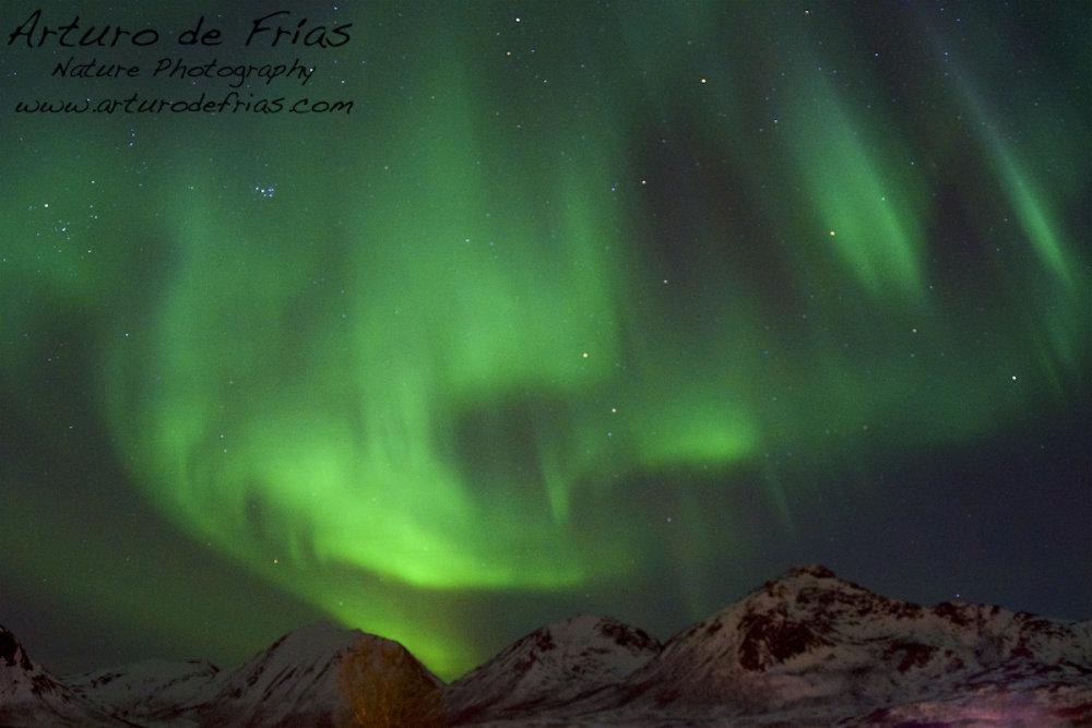 Aurora in the fjord 2