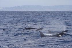 Orcas breathing