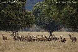 Herd on the Run