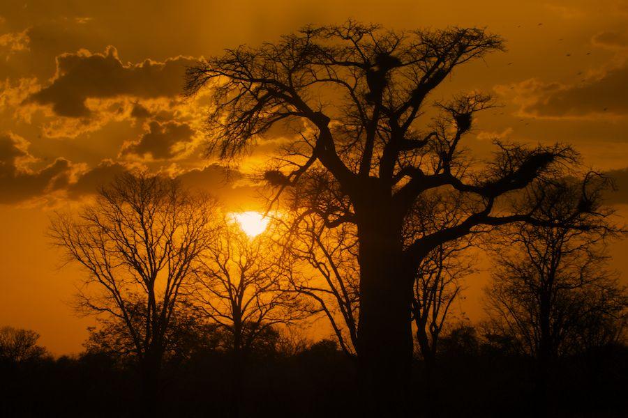 Sunset with Baobab, Zambia