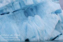 Arctic Tern and Iceberg