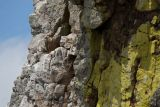 Griffon in quartzite wall